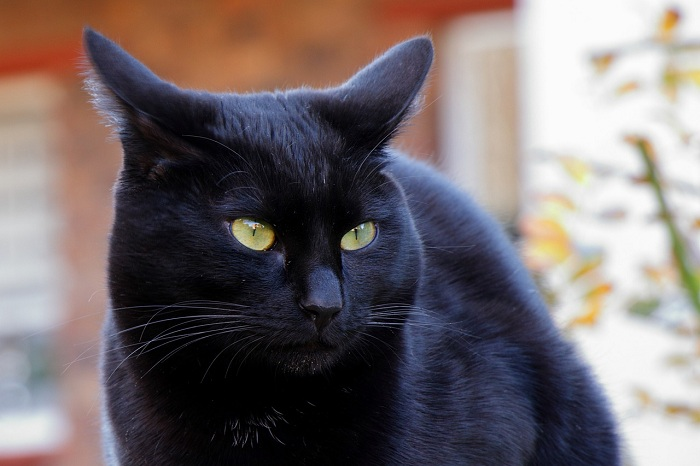In the Middle Ages, devil-fearing Christians killed cats, which carried the unintended consequence of increasing the rat population. That, in turn, helped to spread the Black Death.