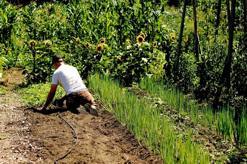Current farming methods deal with weeds either by spraying entire fields or by using manual laborers to physically remove weeds by hand.